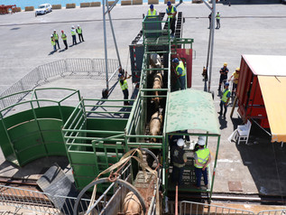 Embarque de gado vivo é realizado pelo Porto de Imbituba