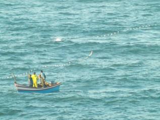 Filhote de Baleia Franca é visto com artefato de pesca preso ao corpo