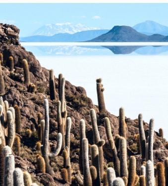 île du pescado salar d'uyuni Inca Huasi