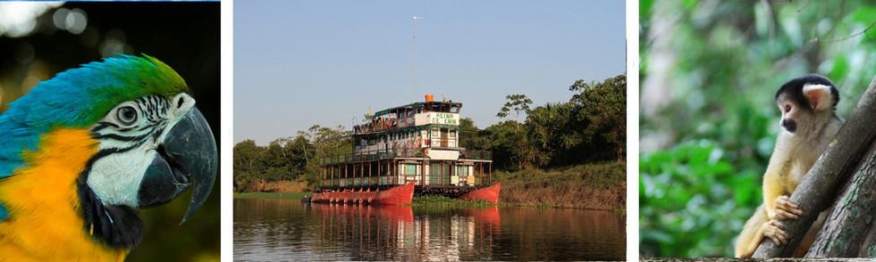 panoramique_croisiere_amazonie-min.jpg
