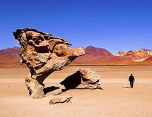 entre salar et Atacama