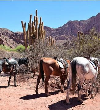 cheval Tupiza trek