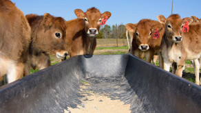 Value and Volume of State's Milk Production Declining