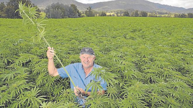 hemp-farm.jpg