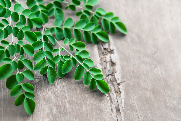 closeup-top-view-moringa-leaves-branch-o