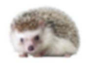 hedgehog_PNG18.png