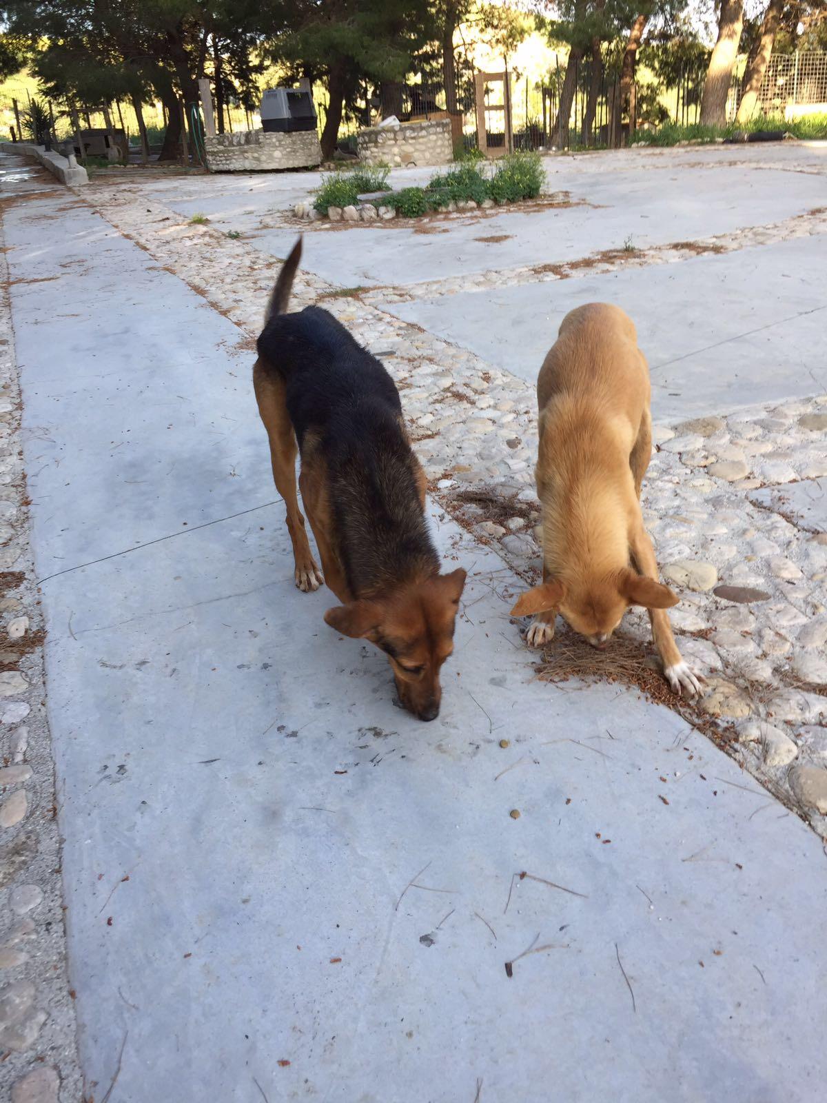 Lilly and spadino