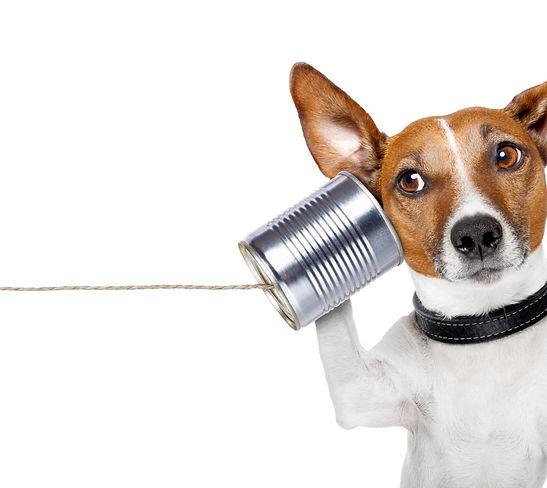 dog rescue centre