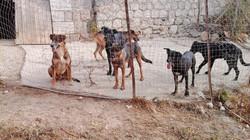 Sammy,Wolfee,Samson,Clyde & Lucky