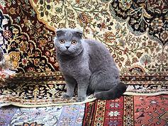 hakan evin cat