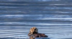 Sea Otter Fun