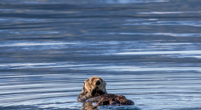 Sea Otter Fun
