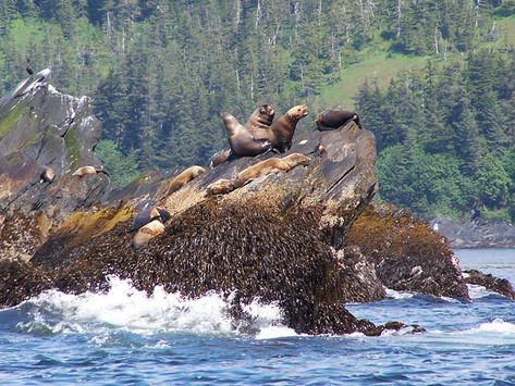 Sea Lion Party
