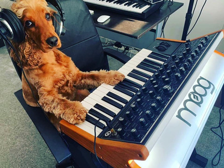 We have a new member of The Audio Bug team!!
