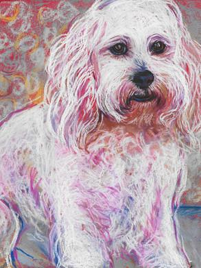 Flores_Pet_Portrait.jpg