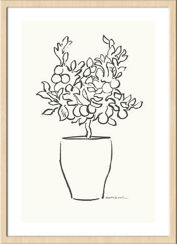 インテリア 海外 北欧 ラインアート ナチュラル ミニマル シンプル ミニマリスト アート 芸術 イラスト ライン 線画 植物 植木 ボタニカル ハーネミューレ 版画 印刷 高品質 おしゃれ 通販 オンライン