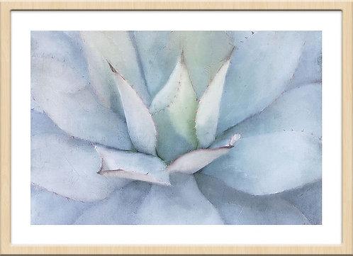Serene Succulent