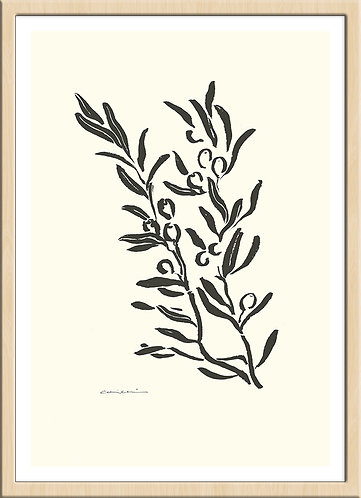 olive op.2