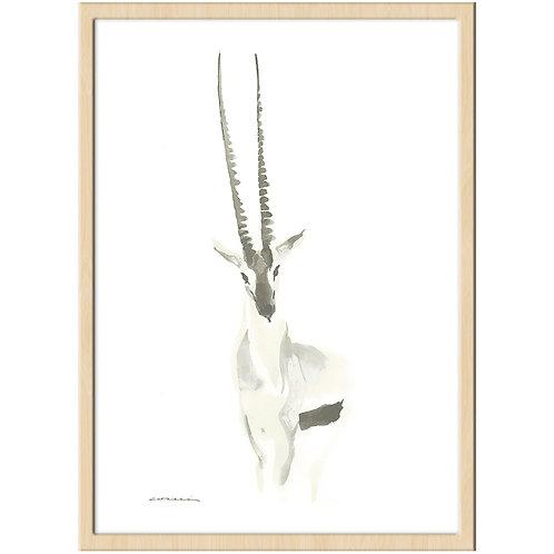 gazelle op.68