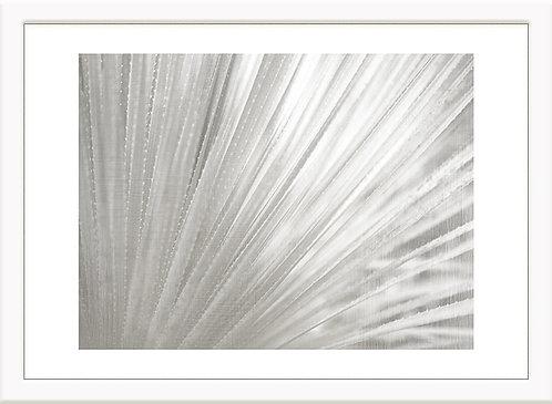 Silver Wash Succulent