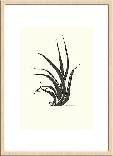 epiphytic plant