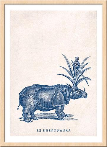 Rhinonanas