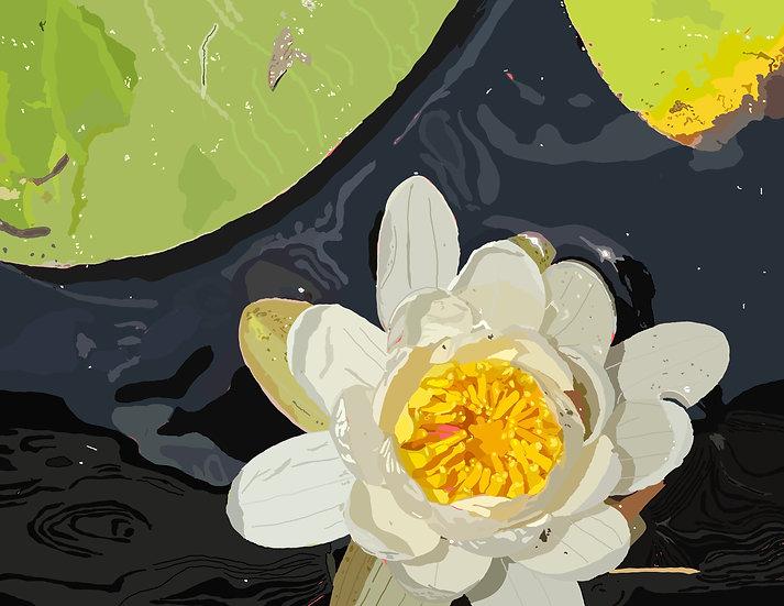 Waterlilies in the Sun