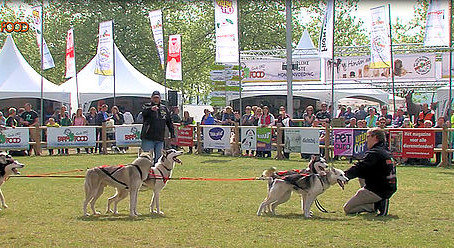 NUYVILAQ WORKING DOGS OP ANIMAL EVENT 2015