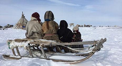 werkhond eskimo sledehonden.jpg