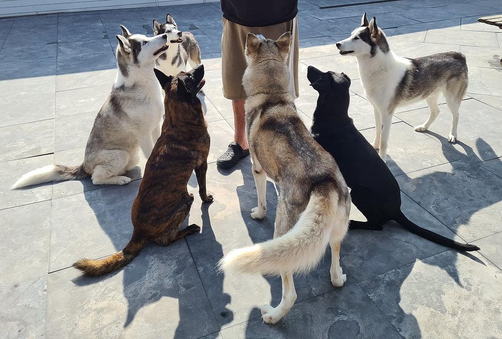 Aandacht honden van Nuyvilaq Working Dog