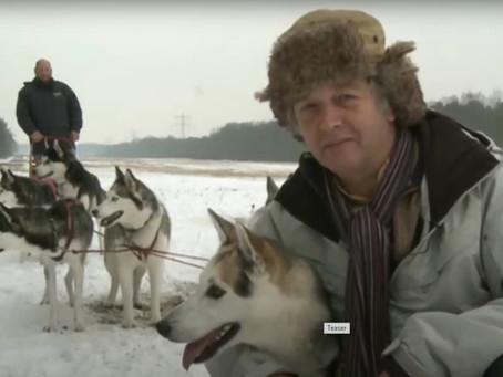 Sledehondrijden op landgoed Lievensberg Bergen op Zoom Omroep Brabant Nuyvilaq Working Dogs