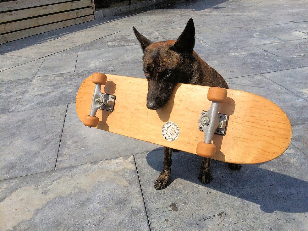 xtreme skateboard.jpg