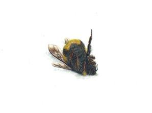 Bee 2, watercolour