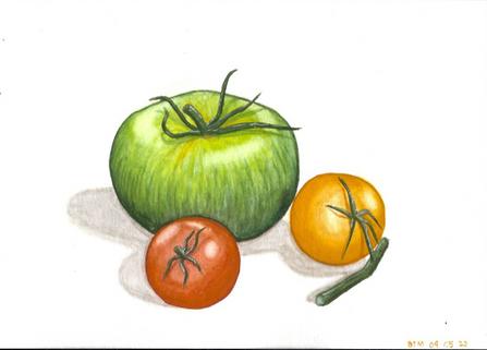 Tomatoes, gouache