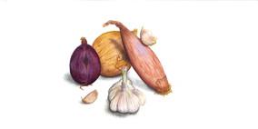 Allium, gouache