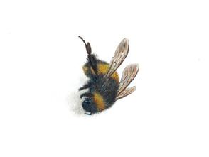 Bee 3, watercolour