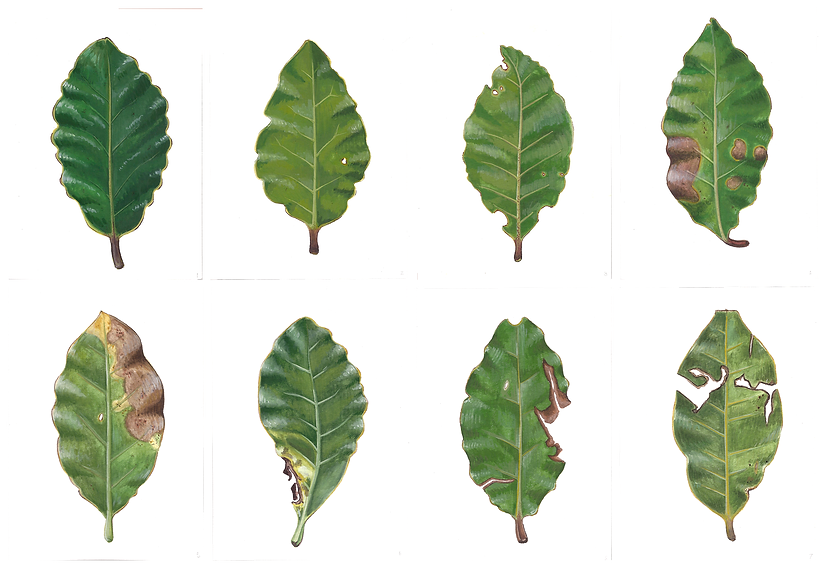 All Leaves - Compressed.png