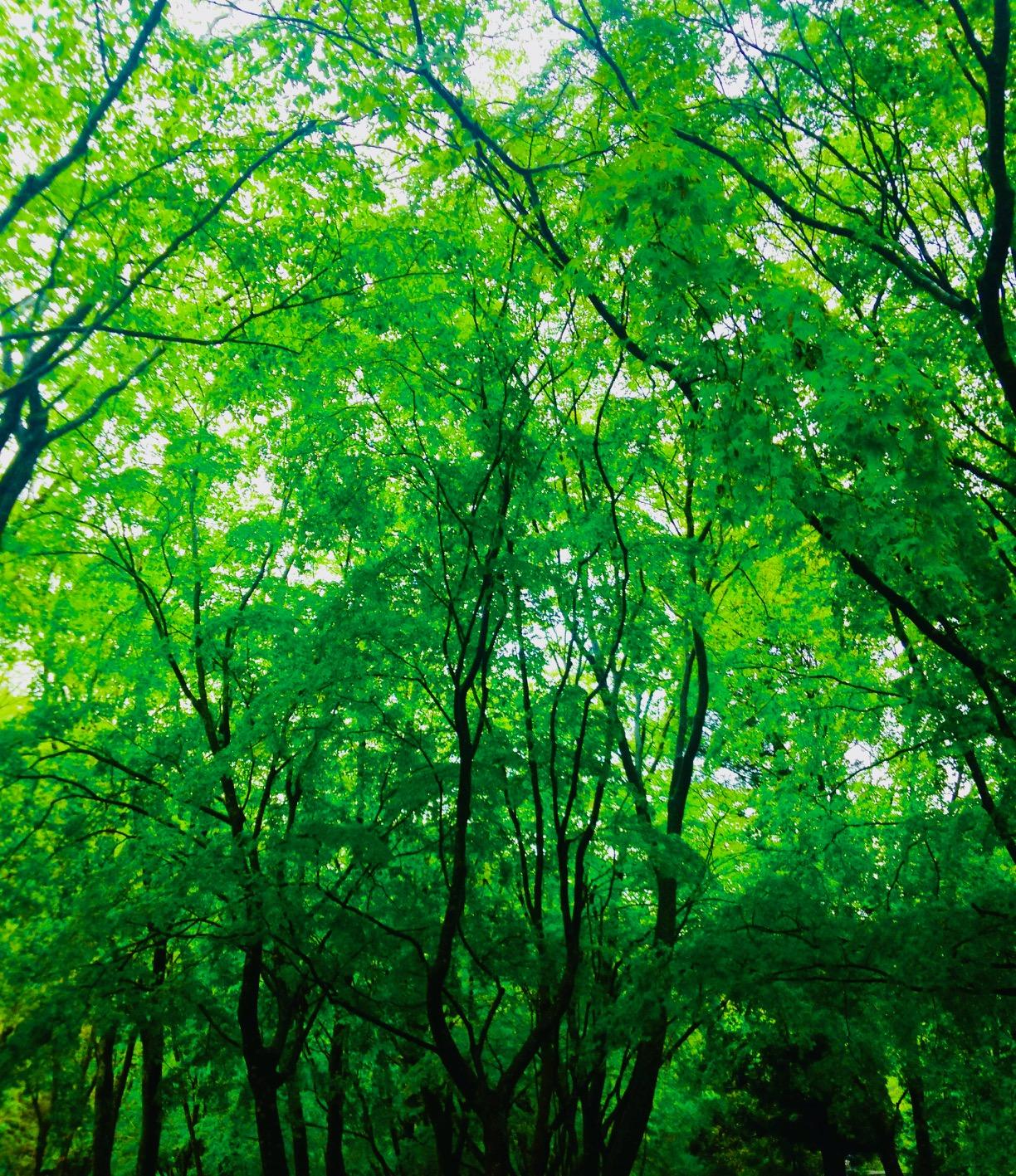 森を見上げて