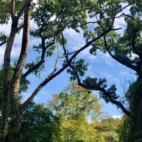 森歩き日記 Vol.12 「くずは渓谷コース」
