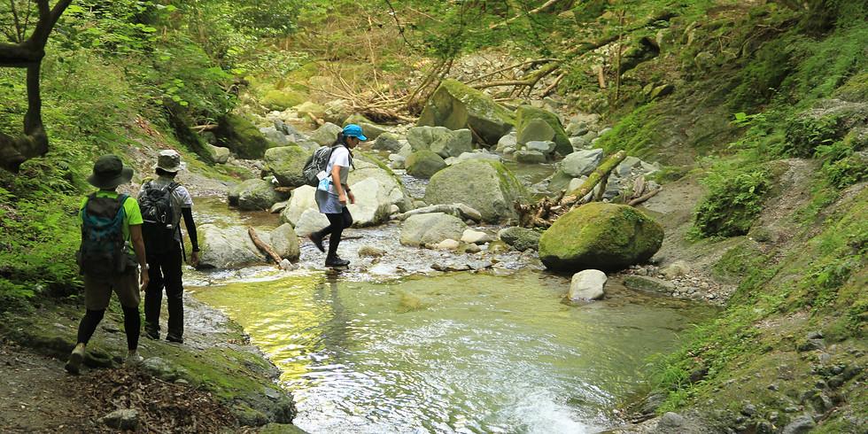 6/26(土)1組=3名限定| ゆっくり山歩きをしながら「渓谷散策」でリフレッシュ