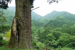 箒沢&大滝コース