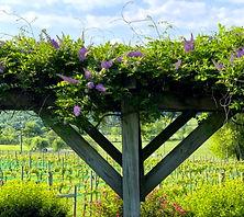 flowering trellis.jpg