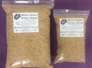 Wheat berries-WS-low.jpeg