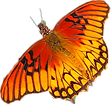 Butterfly Orange.png