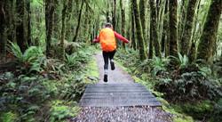 Milford Track, NZ