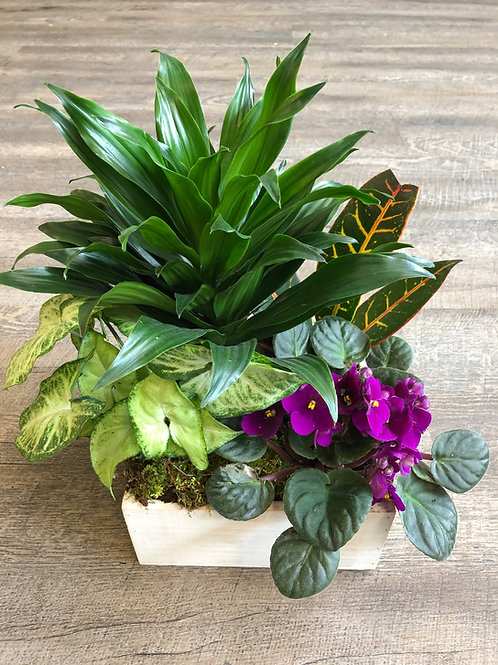 Planter of Tropicals and Flowering