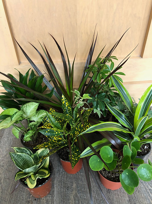Tropical Plants set of 3