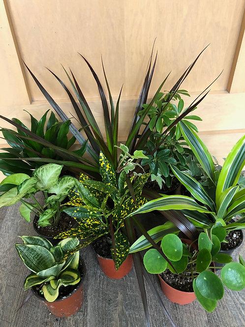 Tropical Plants set of 3