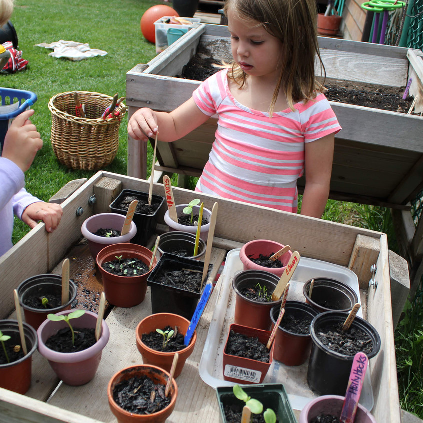 Caring for our baby plants