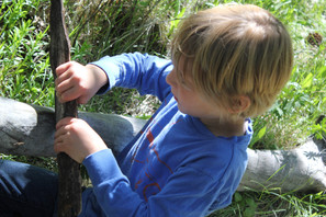 Forest day, Shirt making, Bird watching